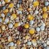 Krmivo pro holuby EKO - celoroční směs 25kg