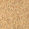 Paddy rýže