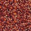 Kukuřice červená 25kg