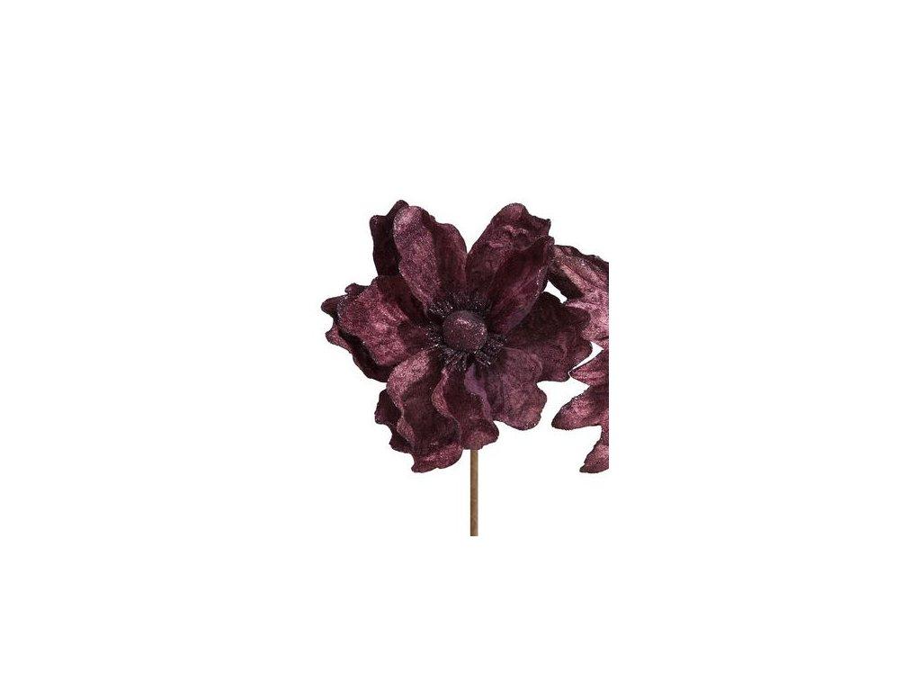 Vánoční sametový květ Fialový