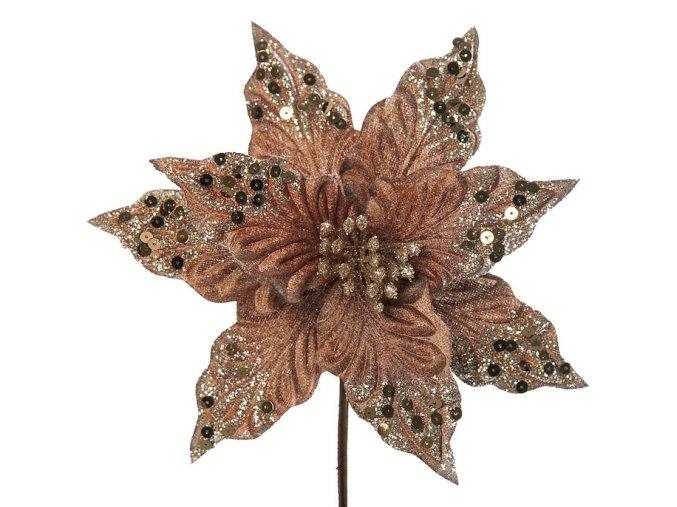 Vánoční květ Setia skořicová
