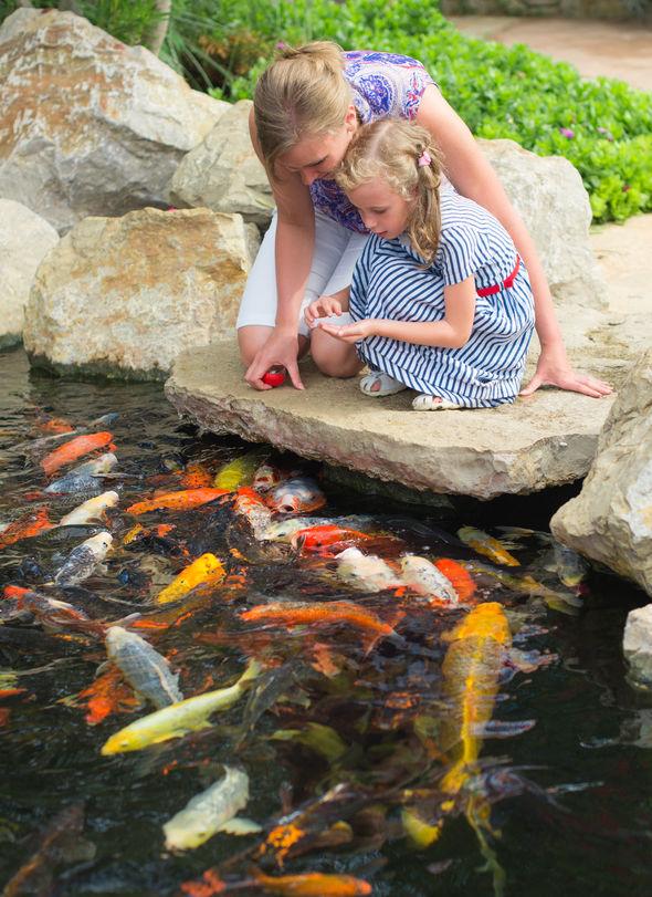 Ako mať zdravé ryby v záhradnom jazierku?
