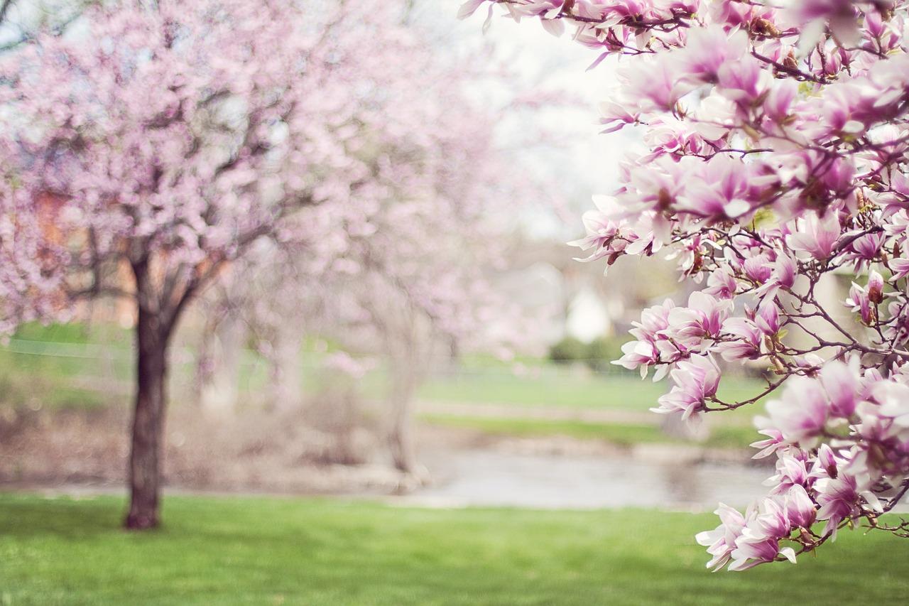 Jazierko na jar