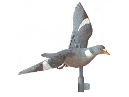 Balabán letící holub hřivnáč