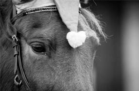 Koňovití testují