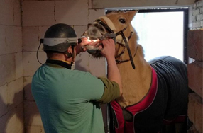 Koňský zubař? Ano!