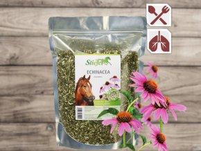 Stiefel Echinacea