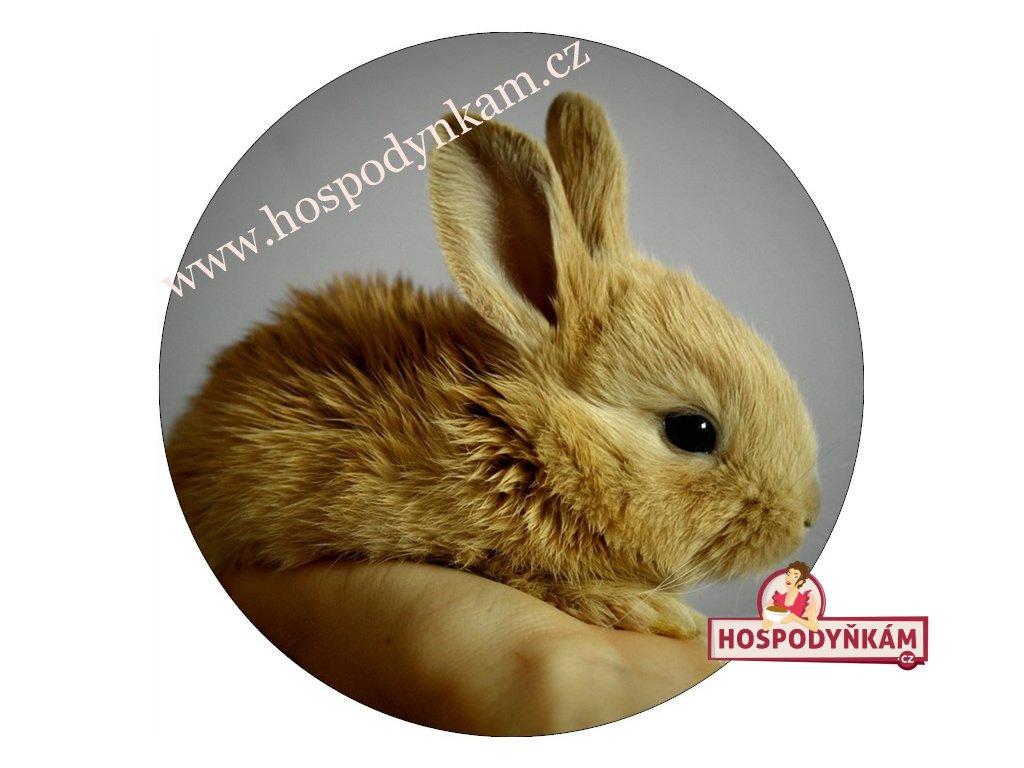 Jedlý papír králík