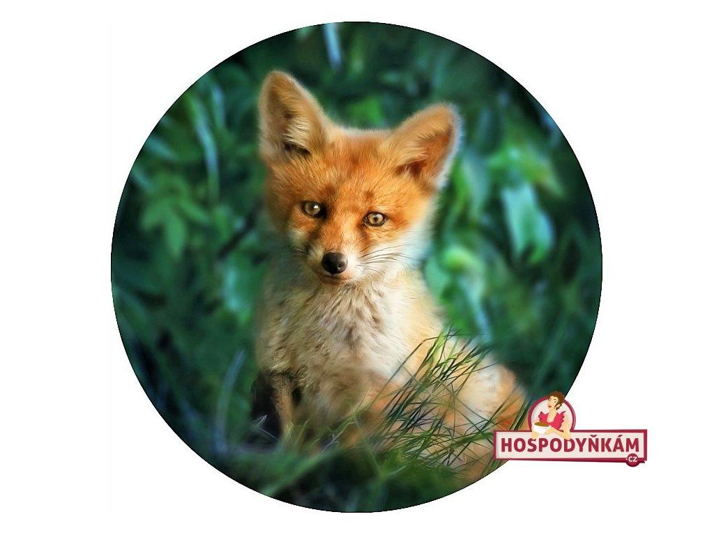 Jedlý papír liška