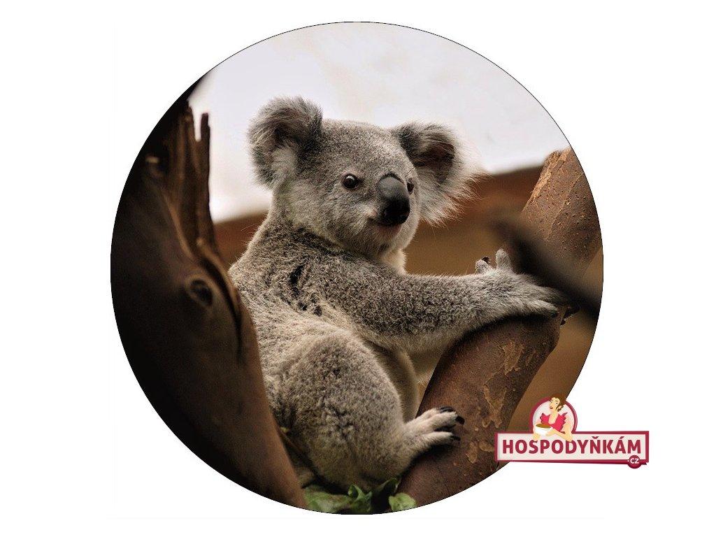 Jedlý papír koala