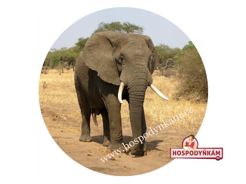 Jedlý papír slon