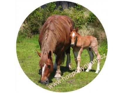 Jedlý papír kůň a hříbě