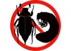 Ochrana (škůdci, plísně, stress a kořeny)