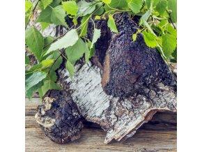 chaga pakuri liquid extract organic inonotus obliquus organic mushroom liquid extract 100ml bottle