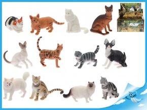 Kočka domácí /divoká 5-7cm 12druhů