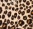 Tigrovaný vzor