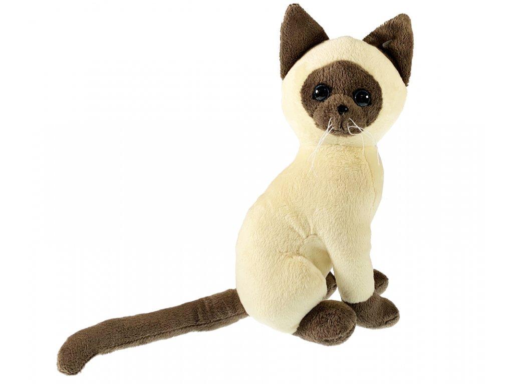kočka1