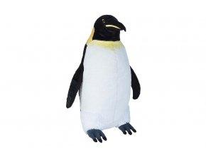 Tučňák císařský
