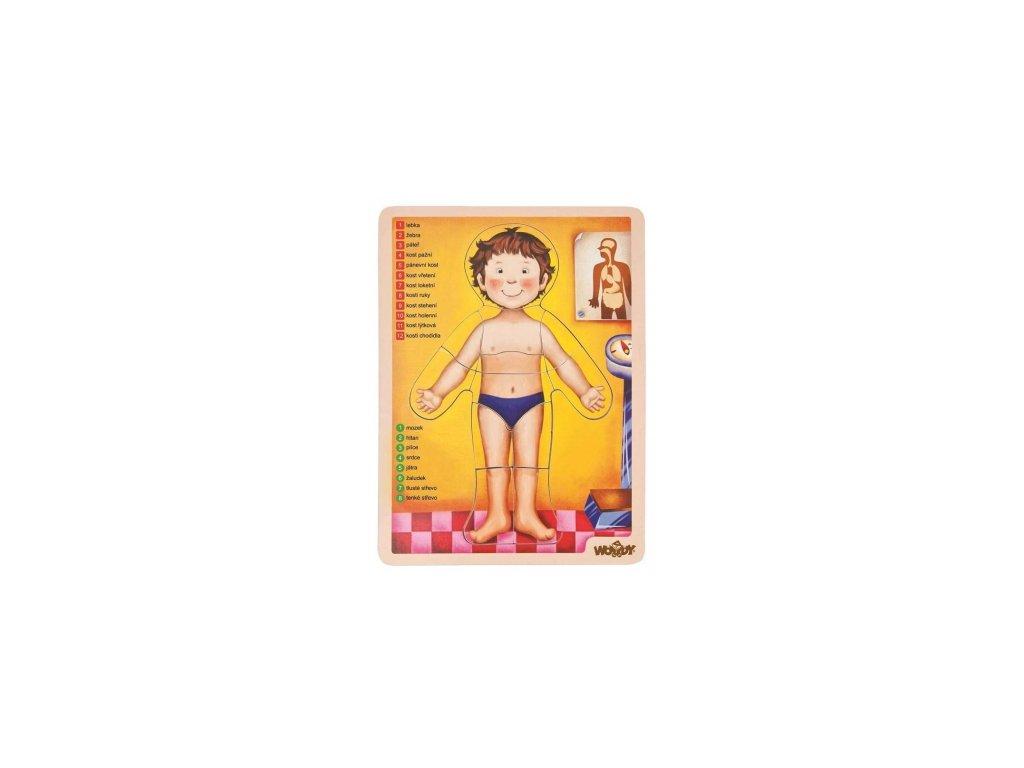 Woody | Puzzle lidské tělo