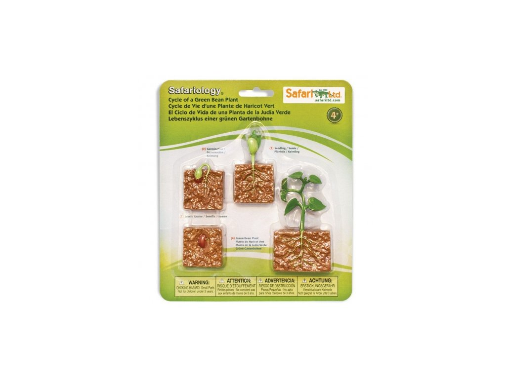 Safari Ltd. | Životní cyklus - Zelená fazole