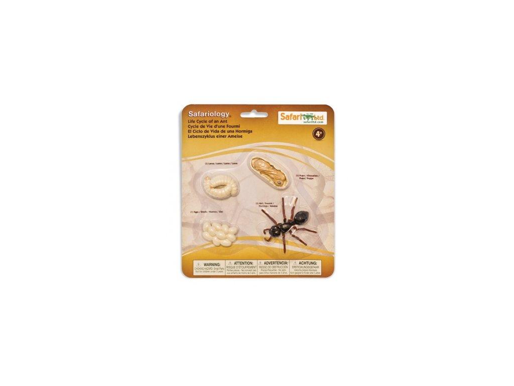 Safari Ltd. | Životní cyklus - Mravenec