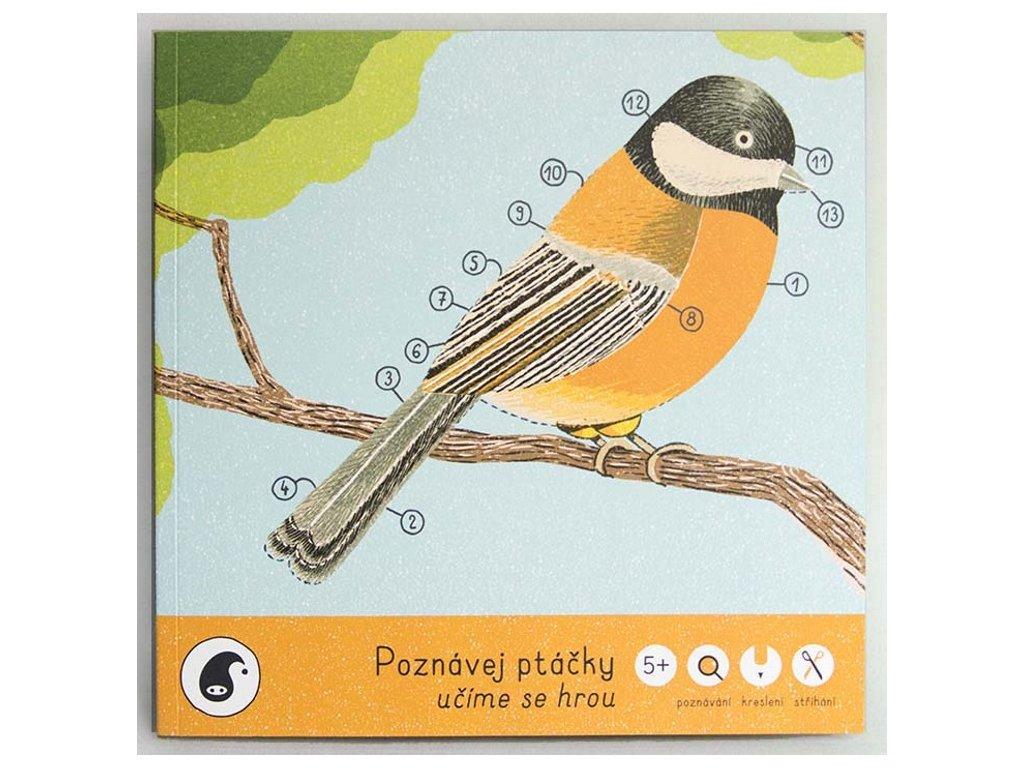 Pipasik | Poznávej ptáčky