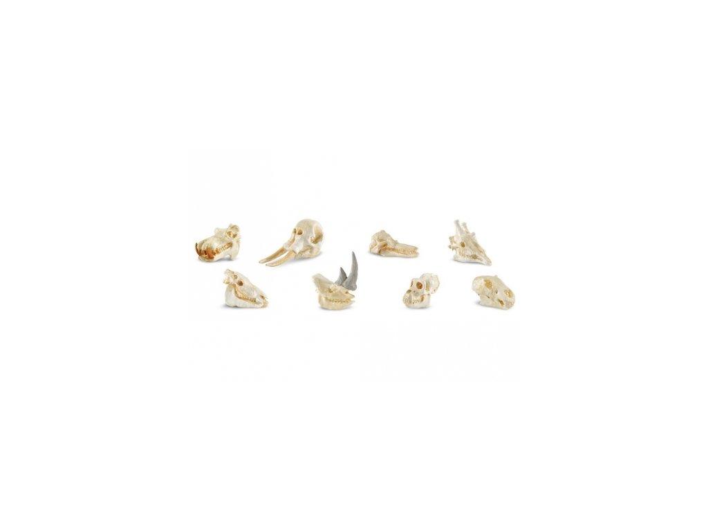 Safari Ltd. | Tuba - Lebky savců