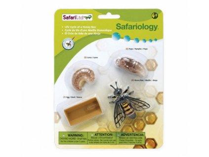Safari Ltd. | Životní cyklus - Včela