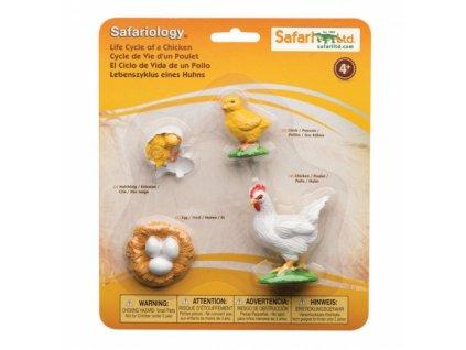Safari Ltd. | Životní cyklus - Kuře