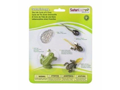 Safari Ltd. | Životní cyklus - Žába