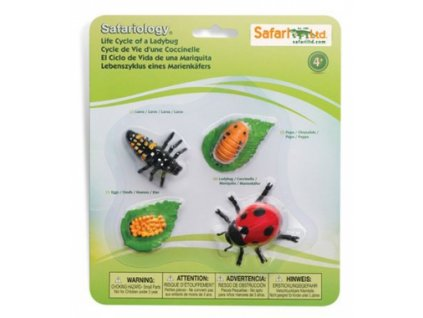 Safari Ltd. | Životní cyklus - Beruška