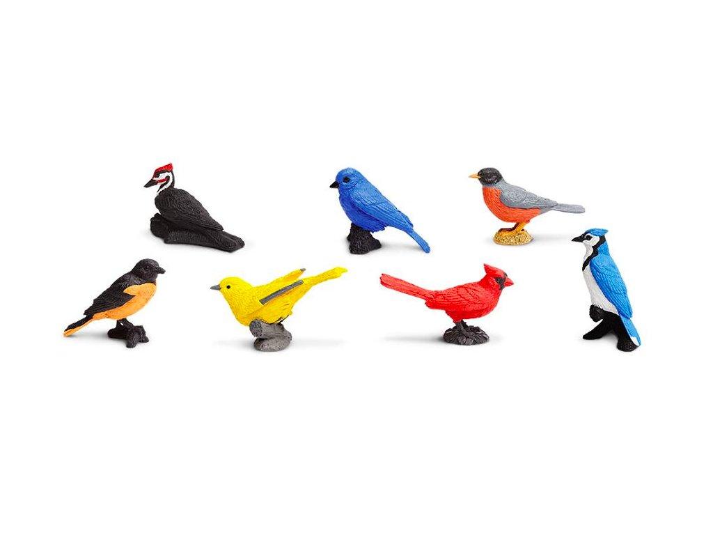 Safari tuba ltd ptaci