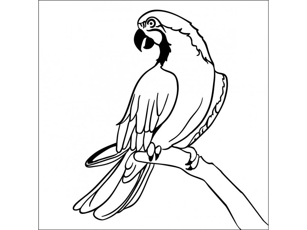 vyr 71 papousek