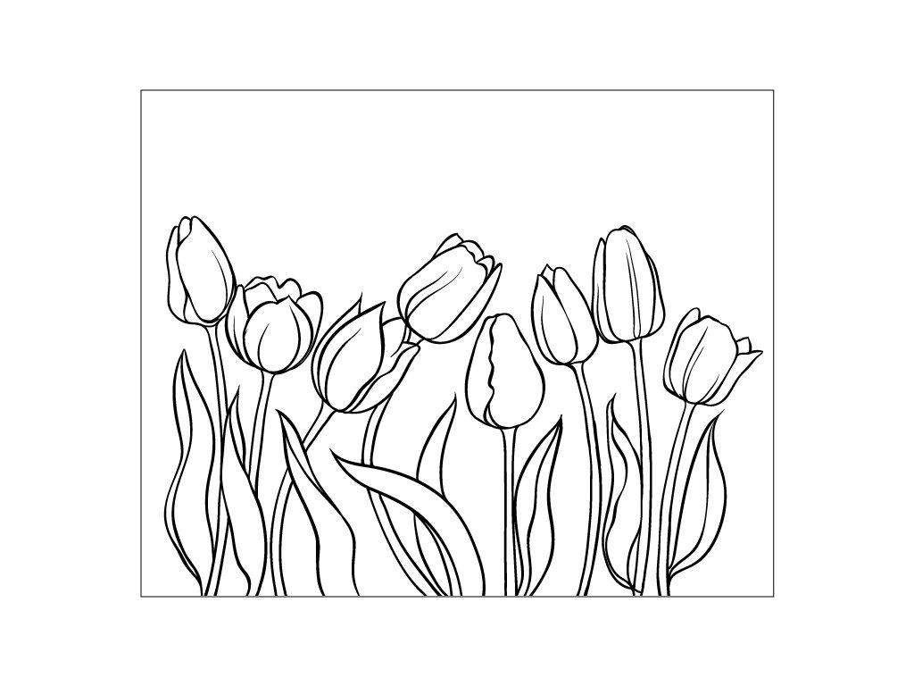 vyr 96 tulipany