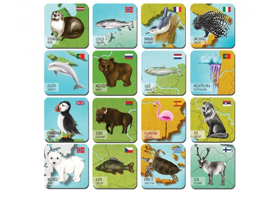 84 80 magnetky evropska fauna