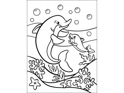 vyr 385 delfini 15x20 fler