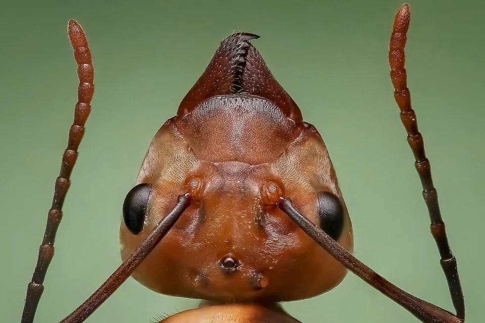 Jak se zbavit mravenců?