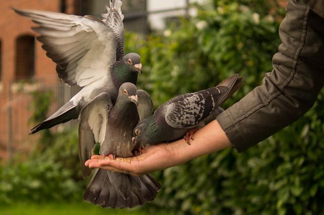 Ničí vám holubi svým trusem majetek? Pořádně je vyplašte.