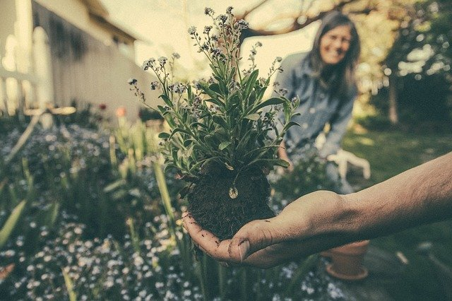 Jak ze zahrady vyhnat mšice