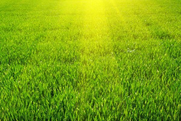 Bofix - pro krásný trávník bez plevele