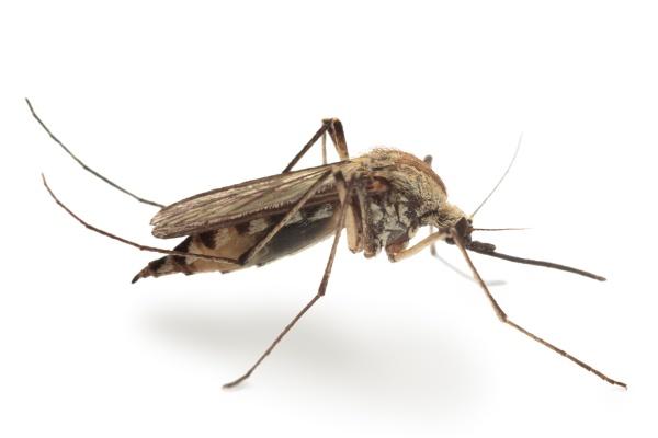 Hubení komárů
