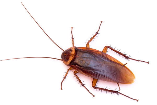 Hubení švábů a rusů