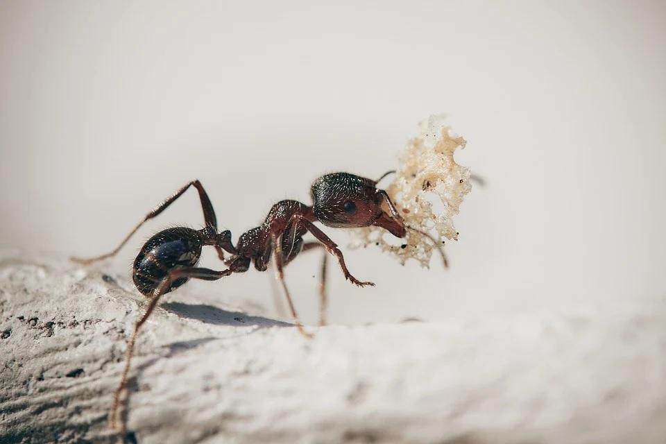 mravenec2