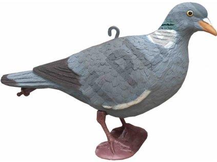 balabán holub hlava nahoře