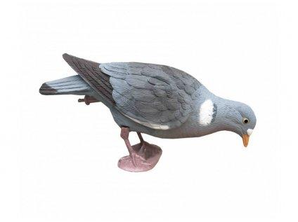 holub hlava dole