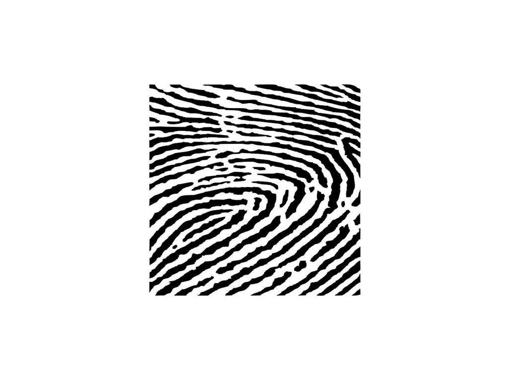 13 arts fingerprint large
