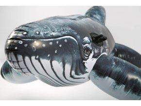 Nafukovací velryba jako živá