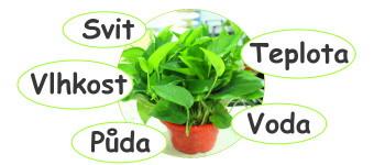 Pěstování rostlin s Arduinem
