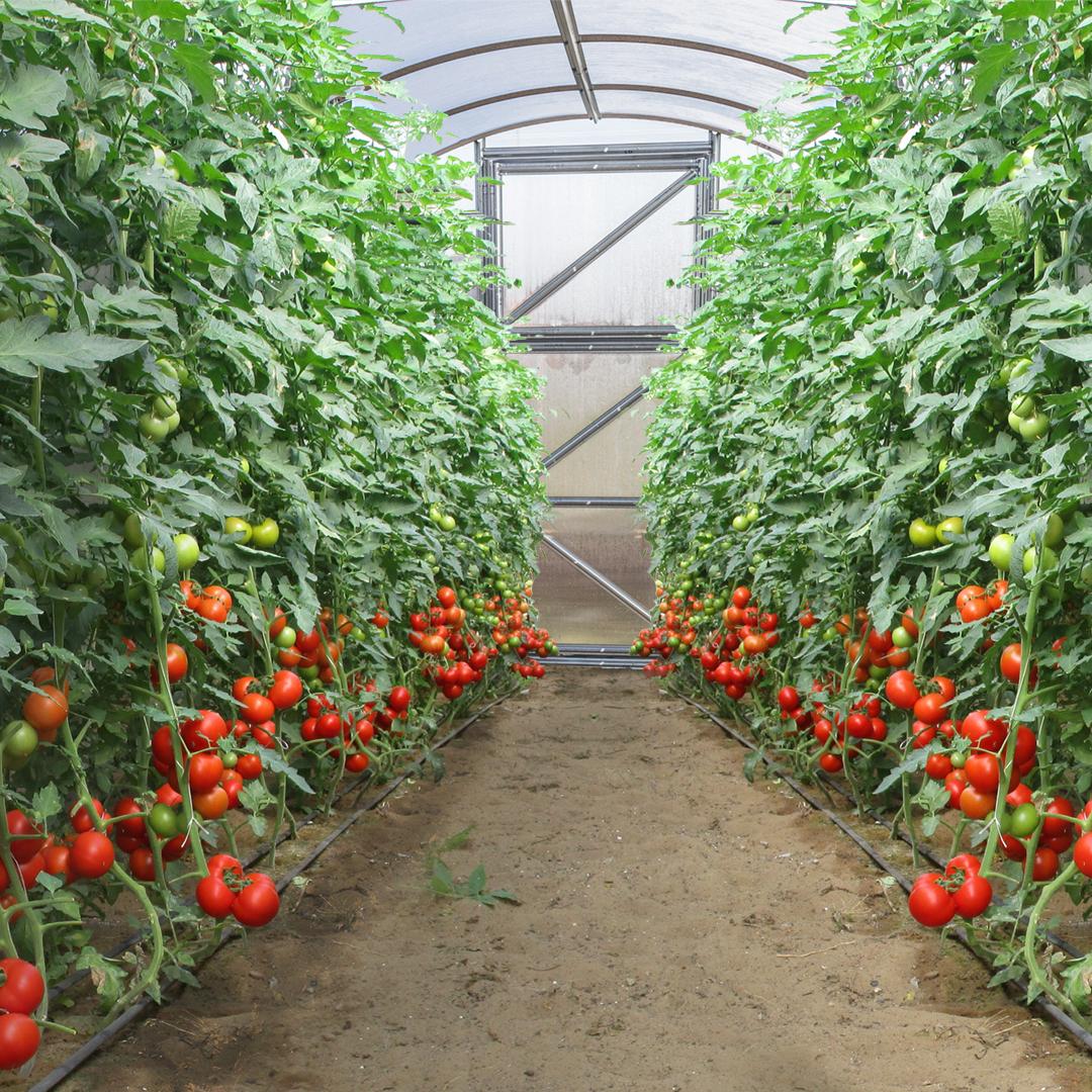 Jak vybrat zahradní skleník