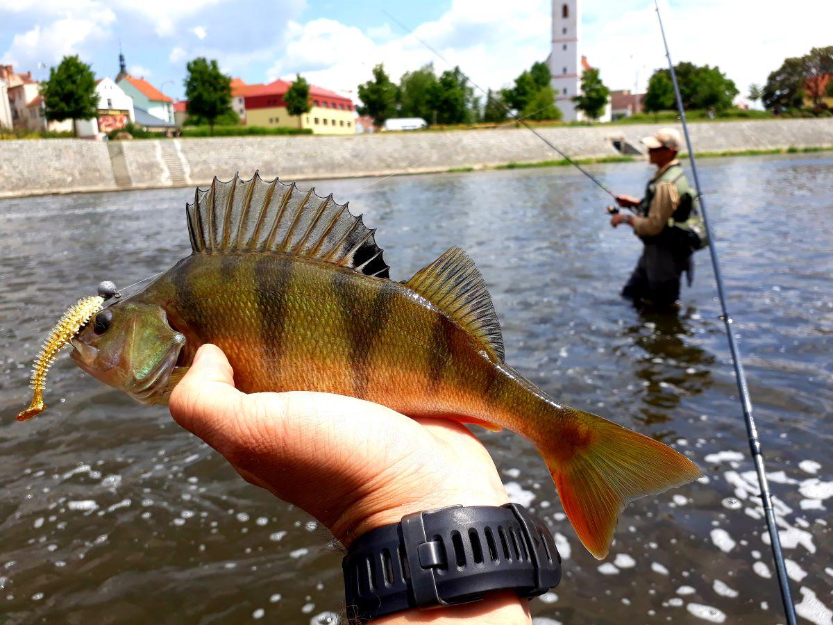 Urbanfishing - aneb jak na ryby ve městě